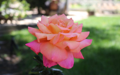 A Magical Experience Awaits at the Enchanted Briar Rose Winery in Temecula CA